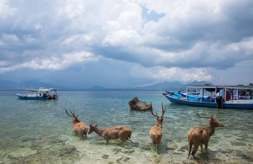Национальный Западный парк Таман Бали-Барат