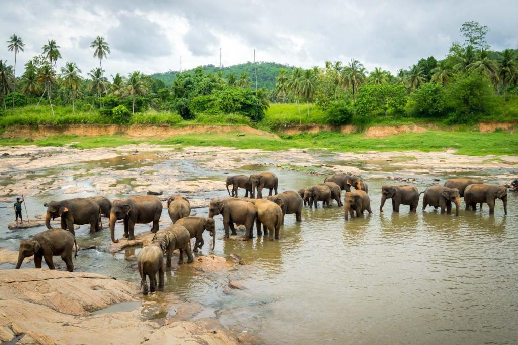 Пинавела - заповедник со слонами