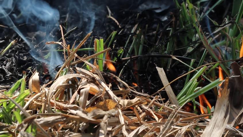 Сухая трава в качестве трута